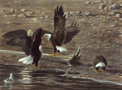 Eagles At Brackendale Robert Bateman