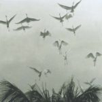 Egrets of the Sacred Grove - Robert Bateman