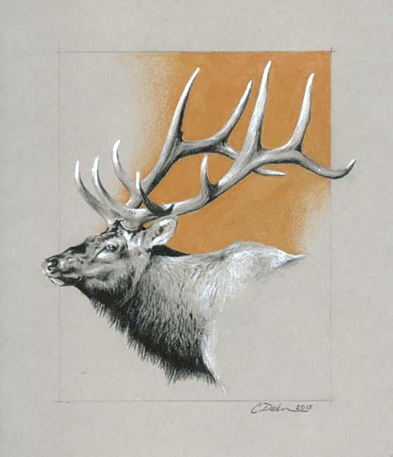Elk - Charity Dakin