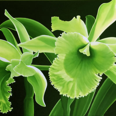 Emerald Glow Orchid Dennis Magnusson