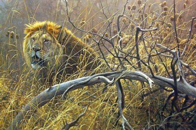 Encounter in the Bush - Robert Bateman
