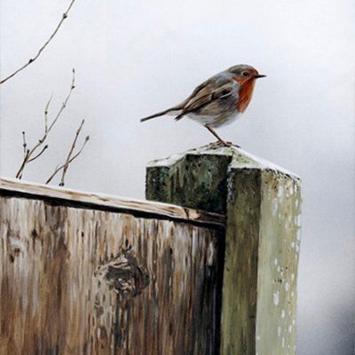 English Robin - Art by Artist Terry Isaac