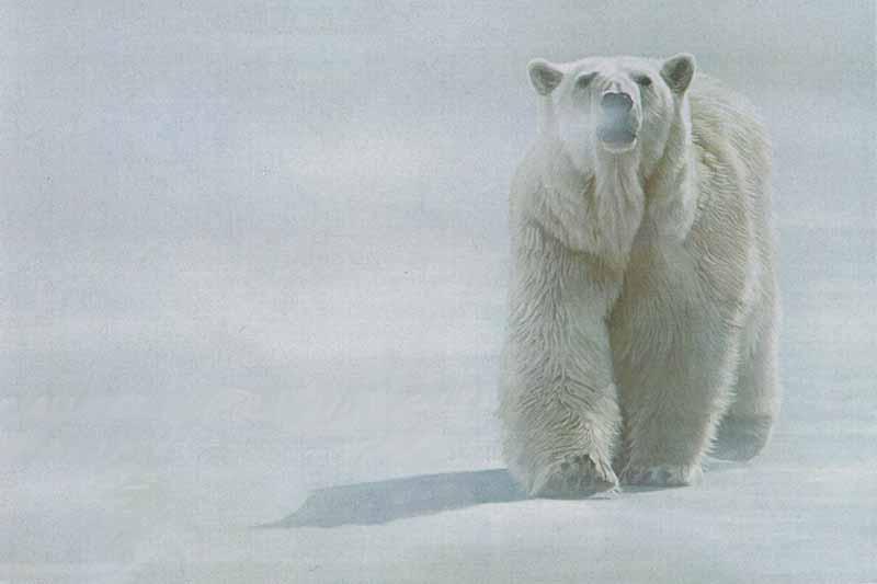 Face Off Polar Bear Terry Isaac