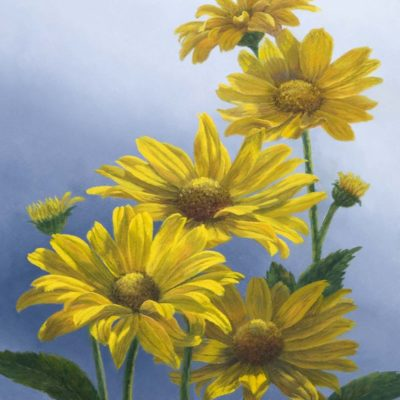 False Sunflowers (Heliopsis) - Elsie Baer