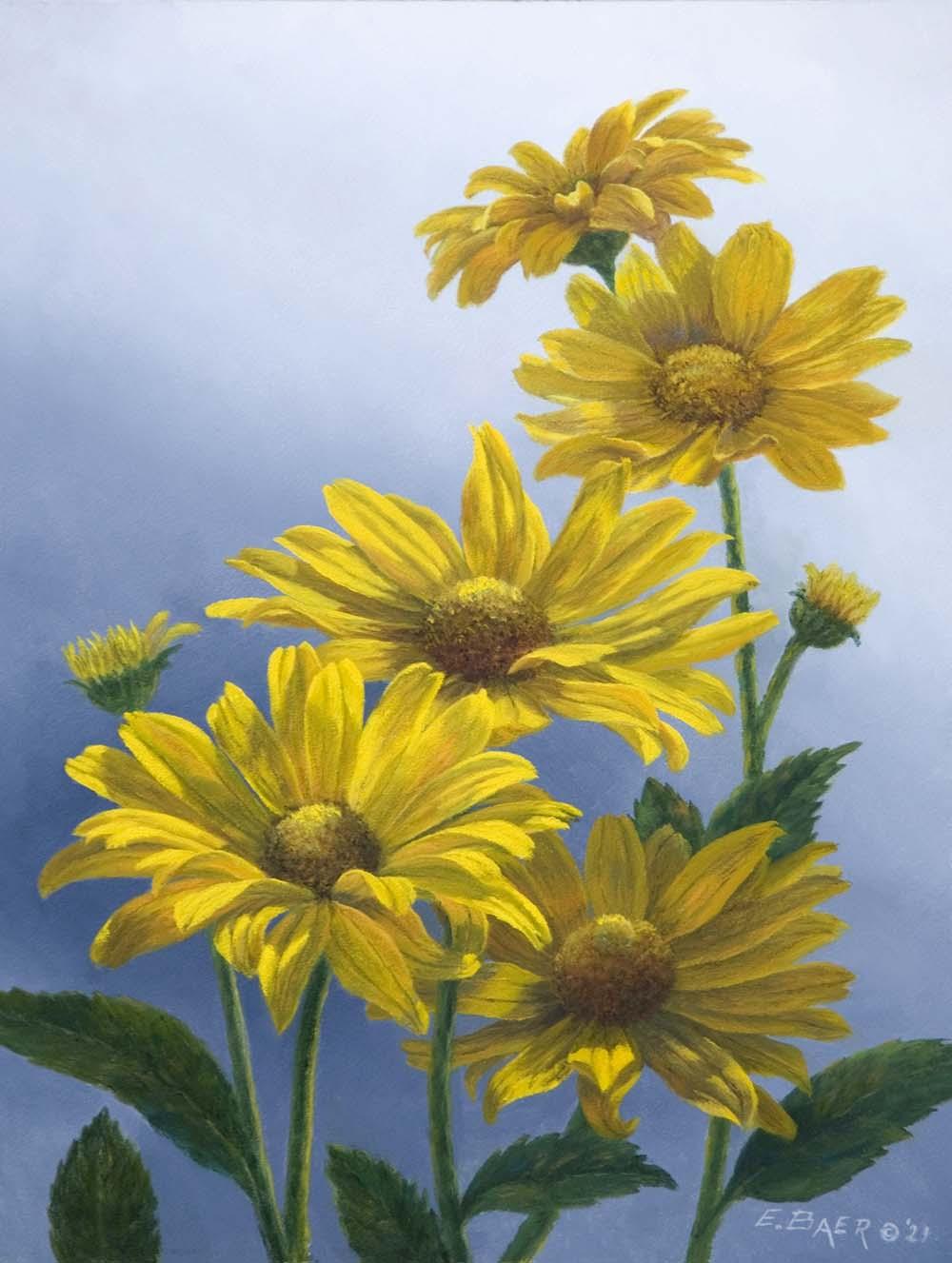 False Sunflowers (Heliopsis) - Elsie Baer