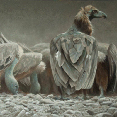 Feast - Vultures - Robert Bateman
