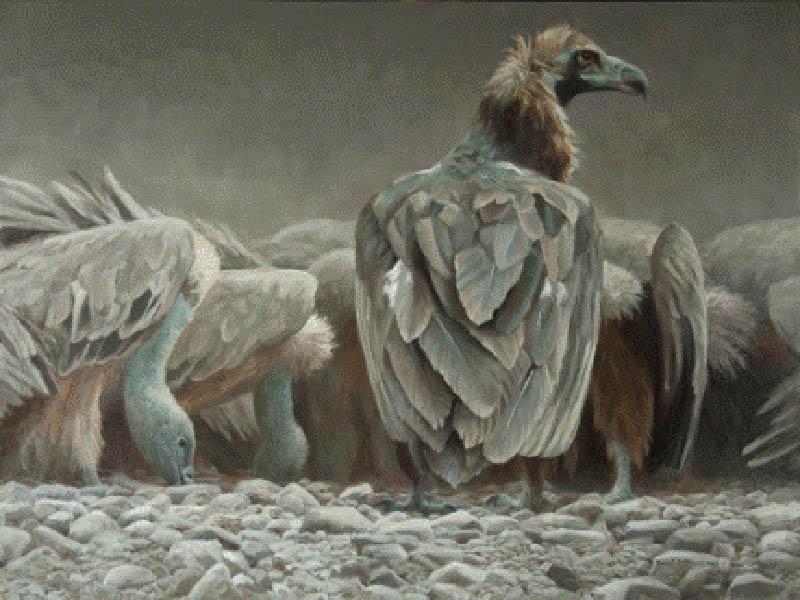 Feast - Vultures - Robert Bateman