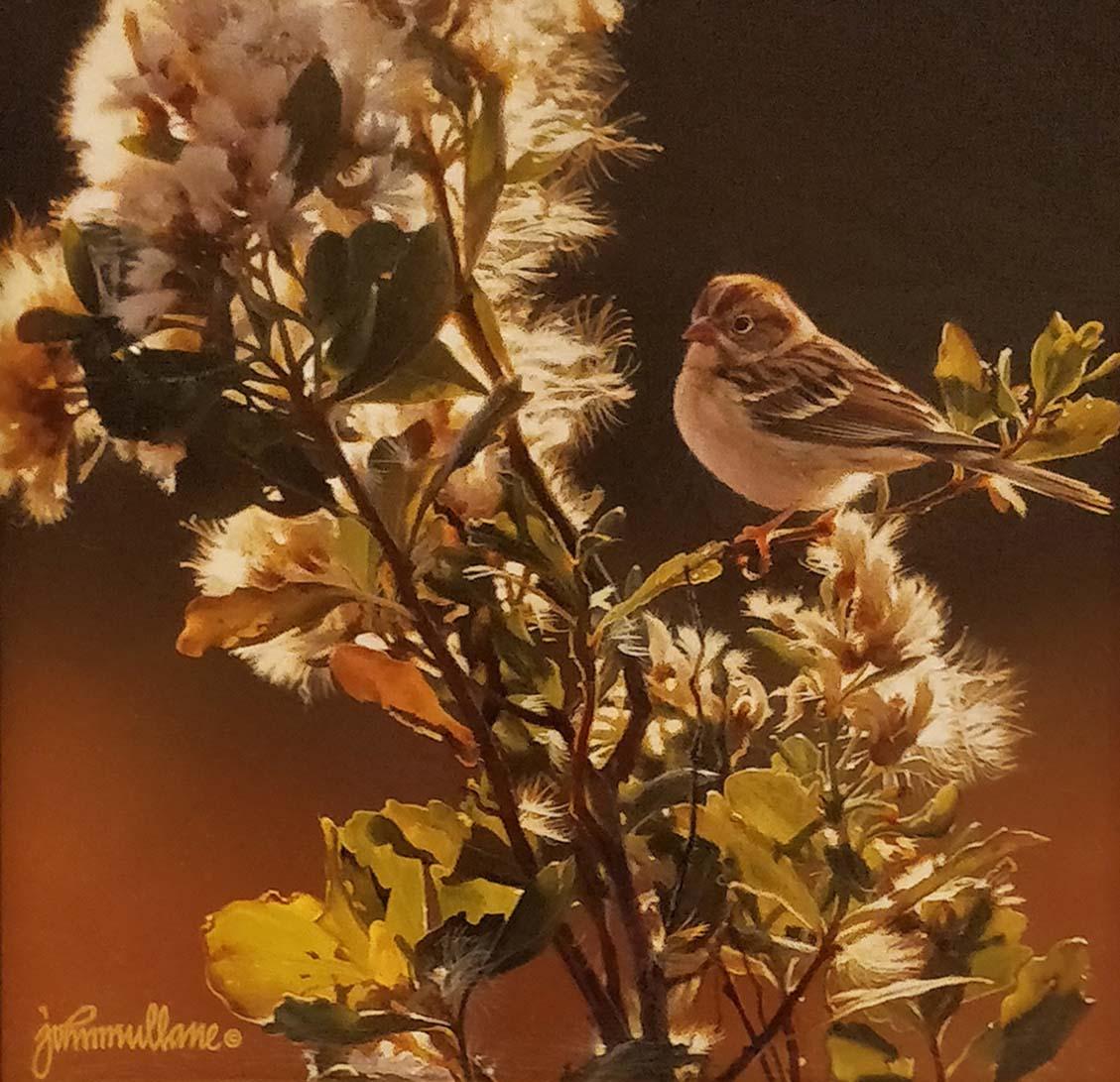 Field Sparrow and Baccharis - John Mullane