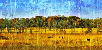 Fields of Gold - Mark A. Cole