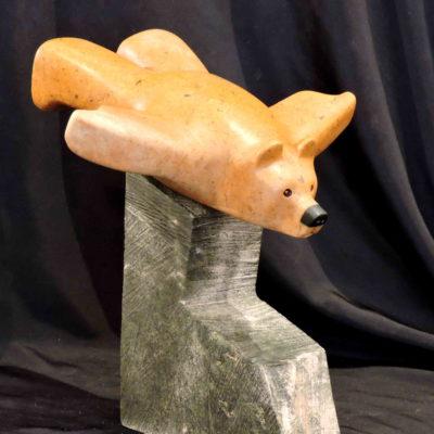 First Class Bear Canada - Vance Theoret