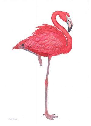 Flamingo - Flick Ford
