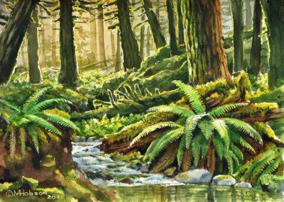 Forest Stream - 2020 - Watercolour - 10 x 14