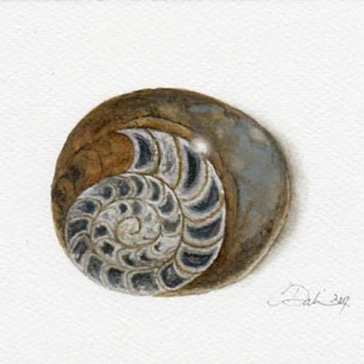 Fossilized Ammonite - Charity Dakin