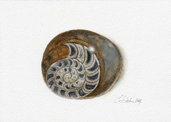 Fossilized Ammonite - Charity Dakin