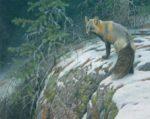 Fox Crossing - Robert Bateman