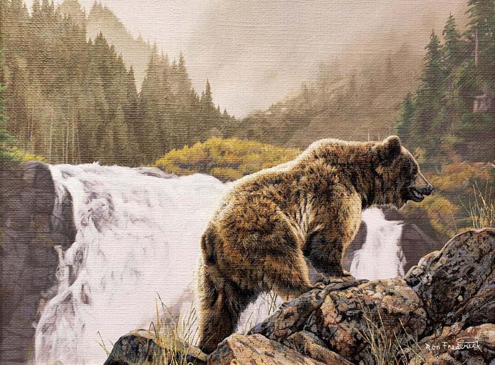 Free Solo - Grizzly - Rod Frederick