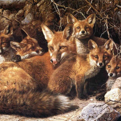 Full House Fox Family Carl Brenders