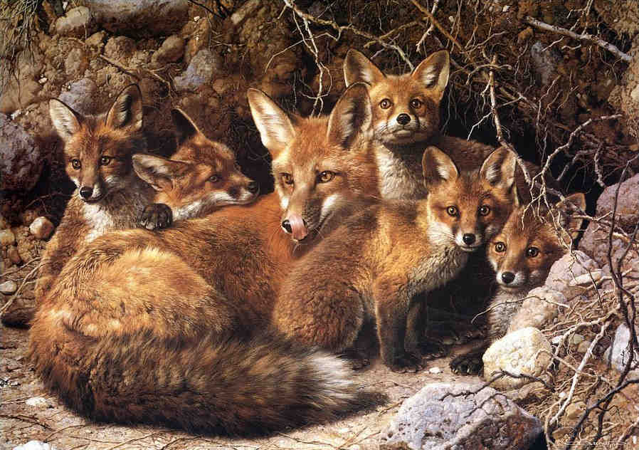 Full House Fox Family Carl Brenders