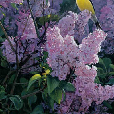 Garden Gold Terry Isaac