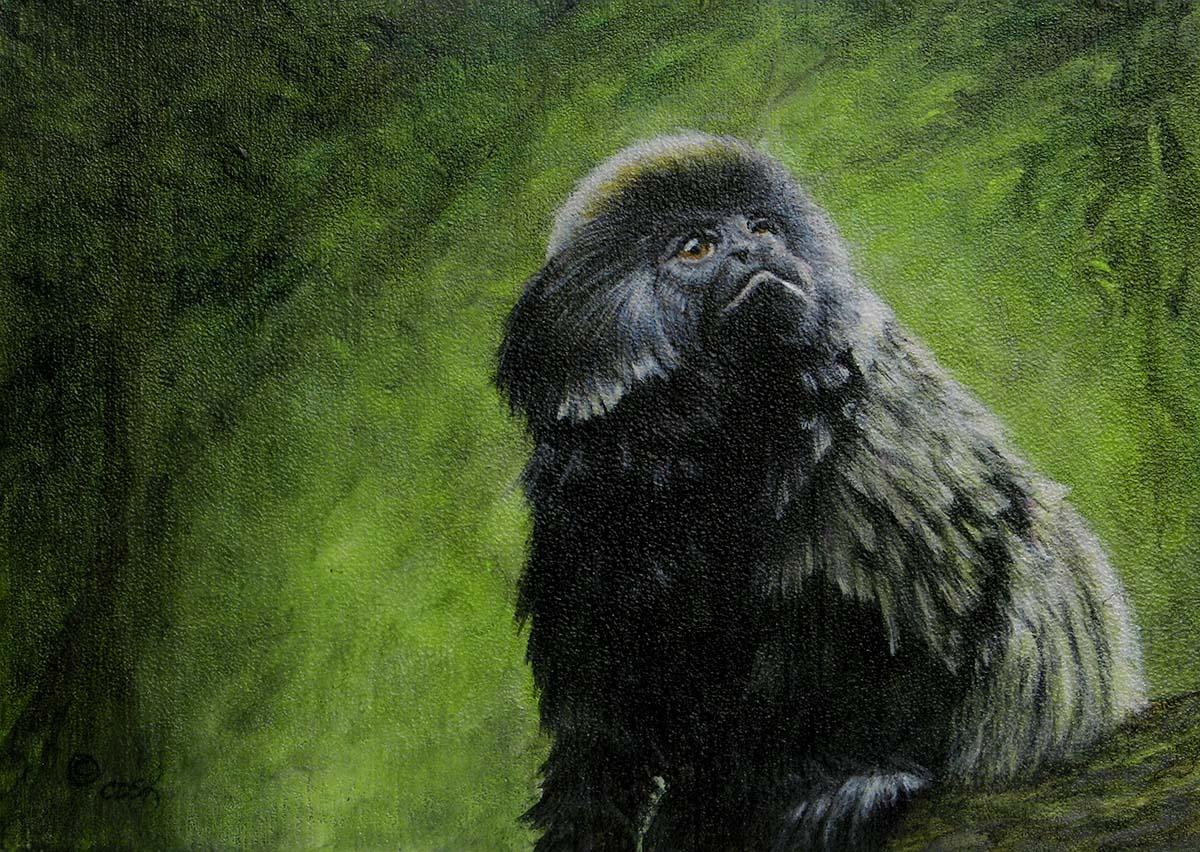 Geoldi's Monkey - Cindy Sorley-Keichinger
