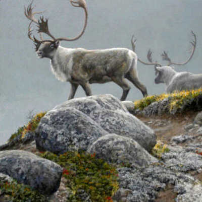 George River Caribou Robert Bateman