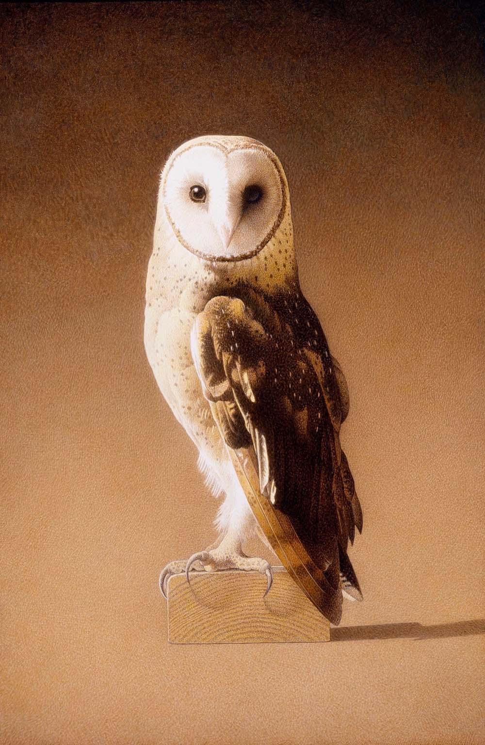 Ghost Bird - Barbara Banthien