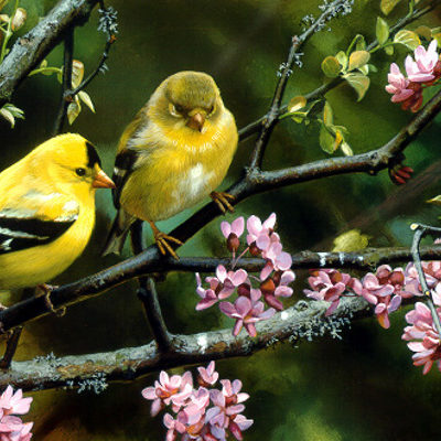 Gleam Of Gold Goldfinches Carl Brenders
