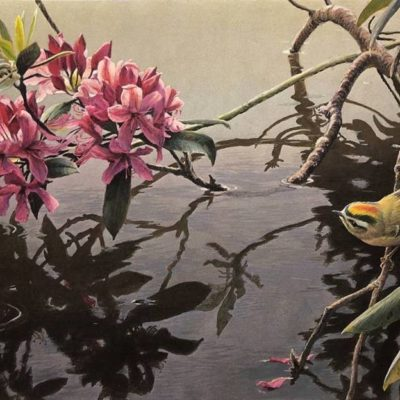 Golden-Crowned Kinglet and Rhododendron - Robert Bateman