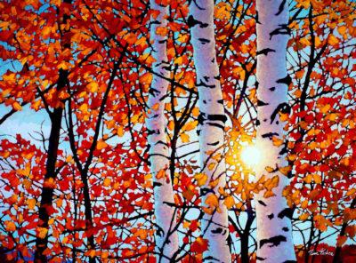 Golden Light Algonquin Tim Packer