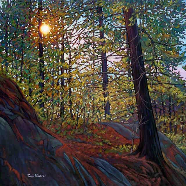 Golden Light Of Spring Tim Packer