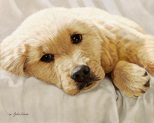Golden Retriever Pup Best Loved Breeds John Weiss