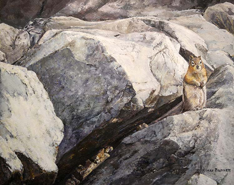 Golden-mantled Ground Squirrel, The Rock Pile, Moraine Lake Area - Kerri Burnett