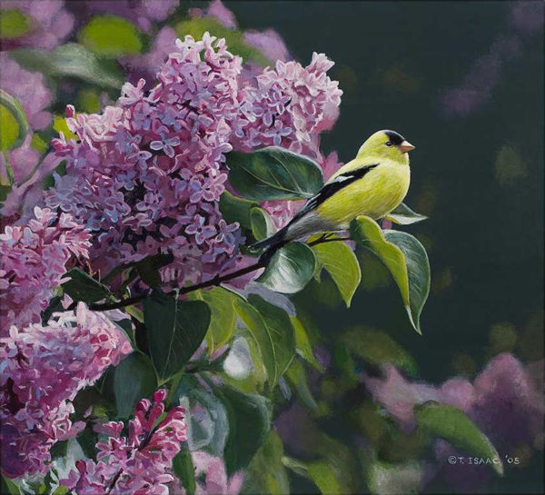 Goldfinch And Lilac Terry Isaac