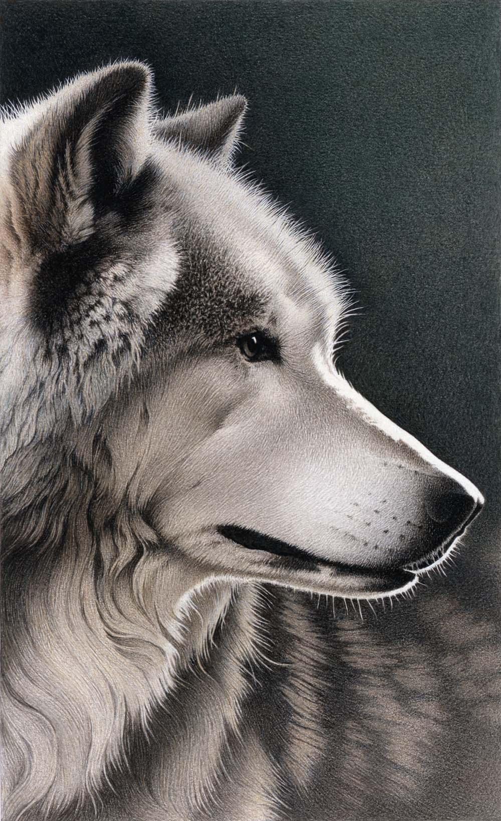 Gray Wolf - Barbara Banthien