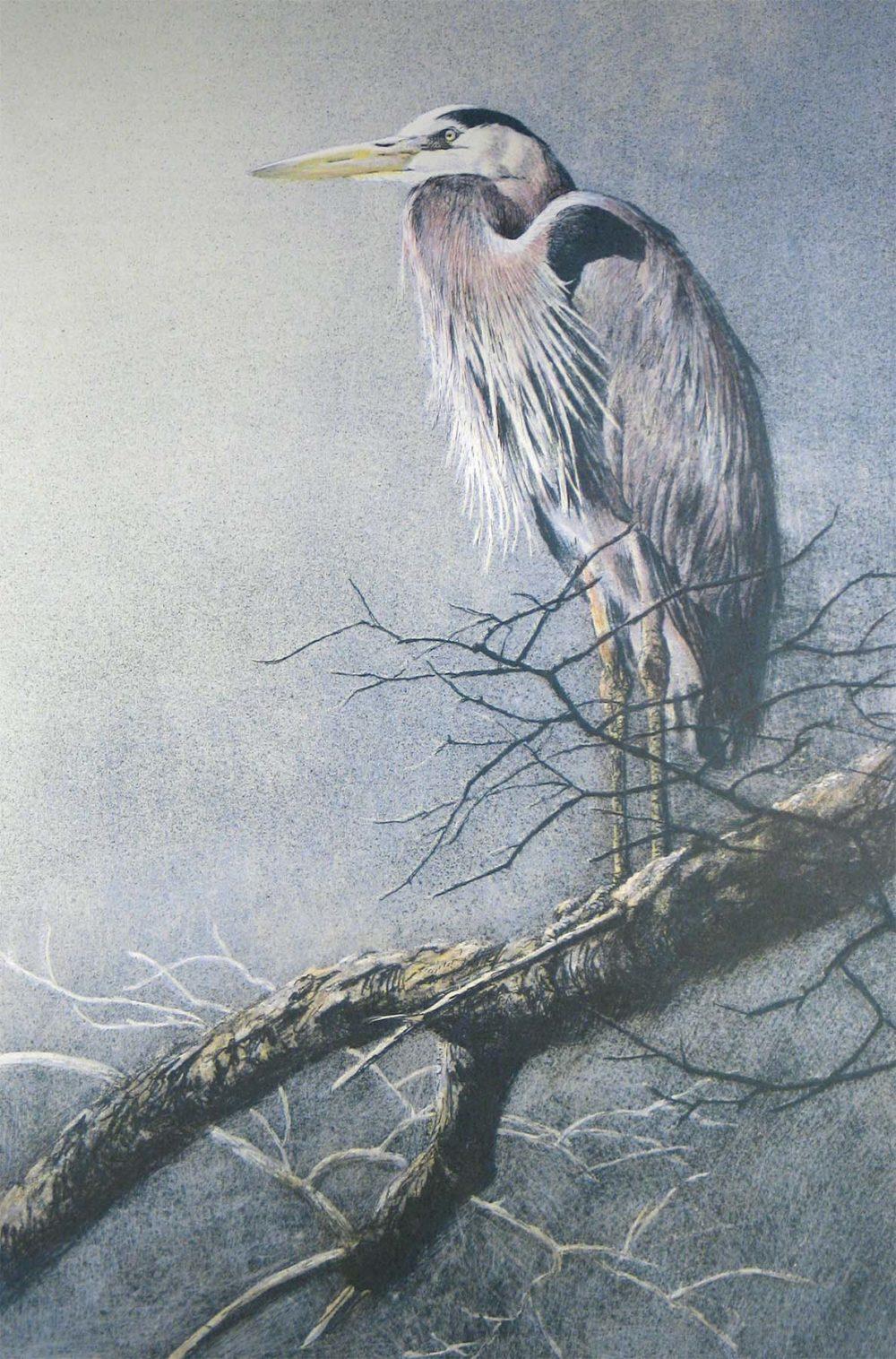 Great Blue Heron - Etching - Robert Bateman