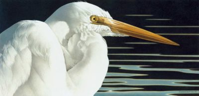 BB Great Egret