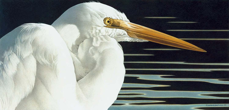 BB Great Egret