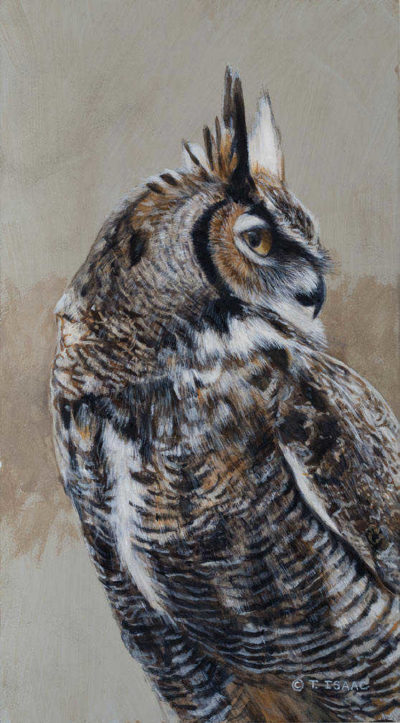 Great Horned Owl Portrait Terry Isaac