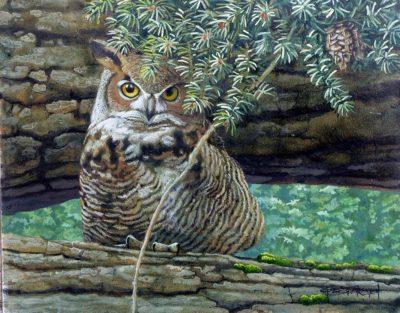 Great Horned Owl in an Old Douglas Fir - Carel Brest van Kempen
