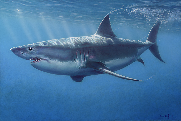 Great White Shark - David Grant