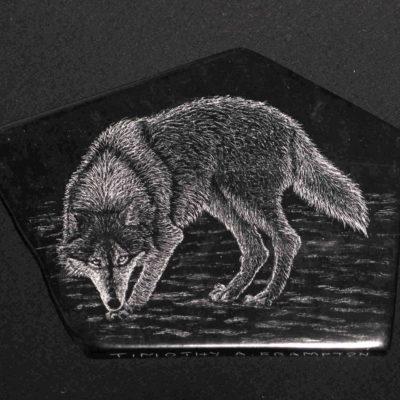 Grey Wolf Tim Frampton (1)