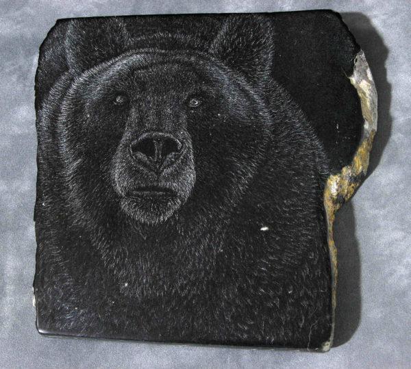 Grizzly Bear Tim Frampton