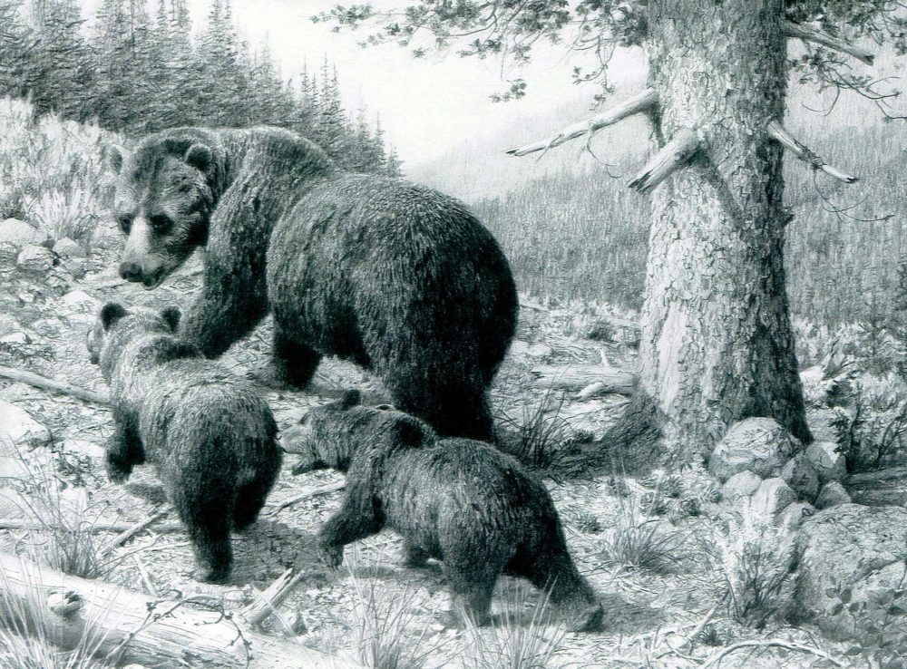 Grizzly Sow with Two Cubs #2 - Carl Brenders