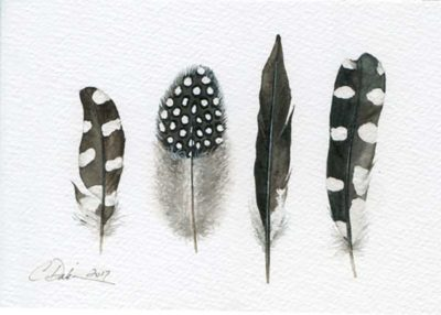 Hairy Woodpecker Feather Collection - Charity Dakin