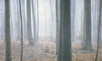 Hardwood Forest - White-Tailed Deer - Robert Bateman