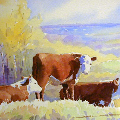 Herefords On Banks Of Peace River Gregg Johnson