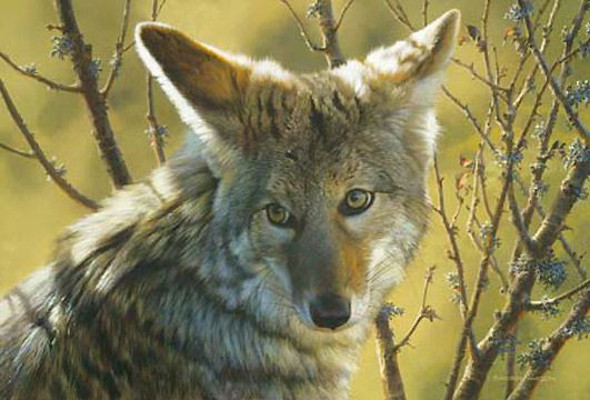 Home Field Advantage Coyote Carl Brenders