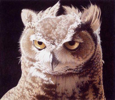 Horned Owl Study - Barbara Banthien