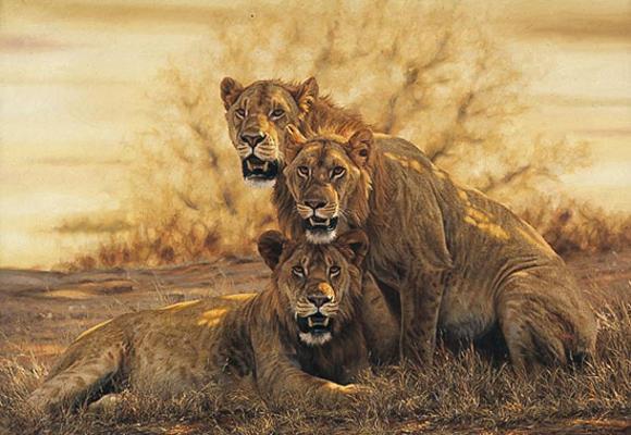 Hot Lions Simon Combes