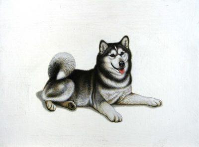 Husky - Braldt Bralds